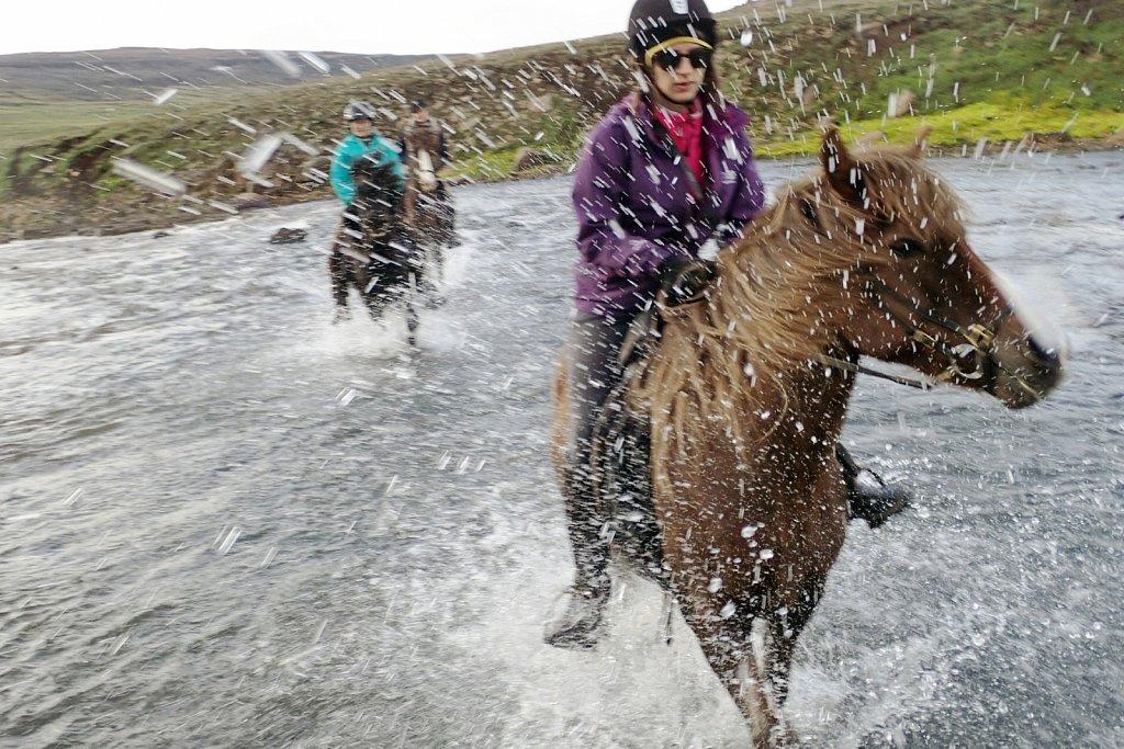 Islande, hestar