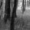 poney-4-juin-025-c.jpg